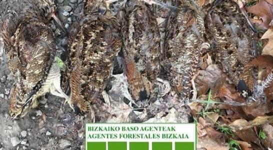 Bizkaia: Guardas denuncian a un cazador por sobrepasar el cupo de becadas