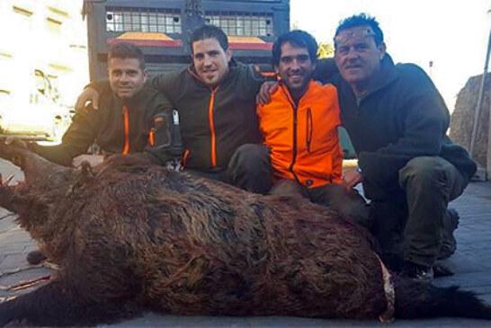 La Rioja: Cazado a cuchillo un jabalí de 165 kilos en Sojuela