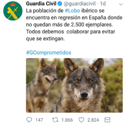 lobo guardia civil