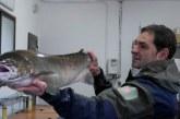 Censado un salmón hembra de 9 kilos y un metro de longitud en la Nasa del Bidasoa situada en Bera