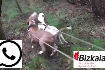 Información para las cuadrillas de caza mayor de Bizkaia