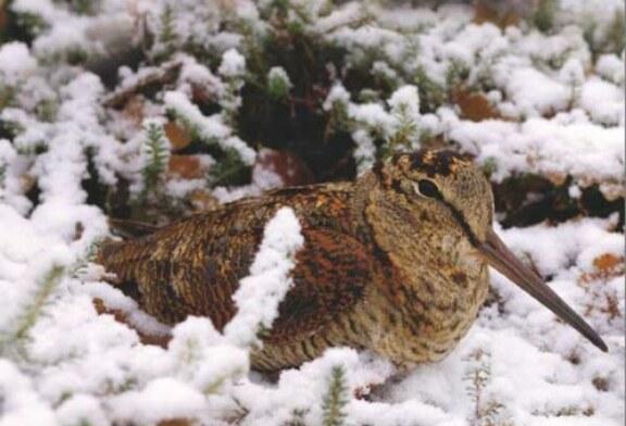 La Diputación Foral de Bizkaia cierra la caza este fin de semana por temporal