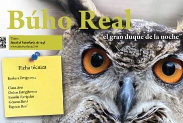 """Cuaderno de Campo: Búho Real, """"el gran duque de la noche"""""""