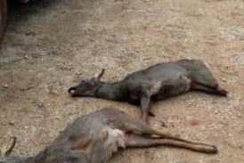 Navarra: La Policía Foral denuncia a 35 cazadores