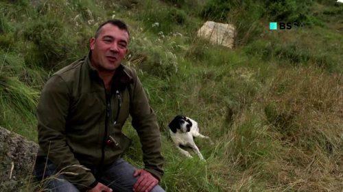 Los cazadores buscan cada vez más un perro especialista