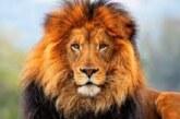 Permitir la caza por trofeo beneficia a animales en peligro en África