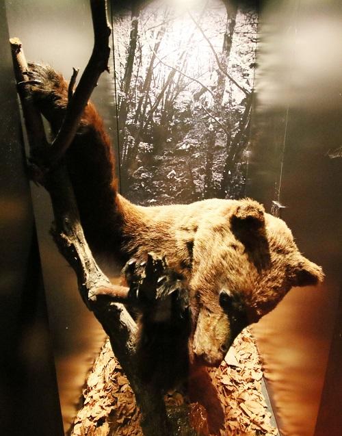 +Ültimo oso matado en Urkiola mañaria