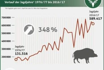 Casi 600.000 jabalís cazados en Alemania en 2017