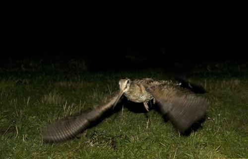 Satisfacción entre los cazadores de becada tras una buena campaña en el norte peninsular