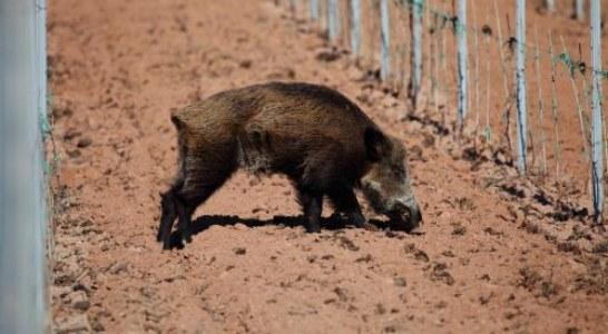 Los cazadores somos la solución para los agricultores alaveses