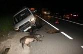 """<span class=""""entry-title-primary"""">Bizkaia: Ganaderos piden a la Diputación más batidas de jabalíes</span> <span class=""""entry-subtitle"""">Aseguran que la «superpoblación» de estos animales causa «daños terribles» en sus terrenos, además de numerosos accidentes de tráfico</span>"""