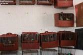 """<span class=""""entry-title-primary"""">Piden dos años y medio de cárcel por capturar jilgueros ilegalmente</span> <span class=""""entry-subtitle"""">El fiscal exige 28 meses por capturar aves silvestres en Caparroso y venderlas como cautivas</span>"""