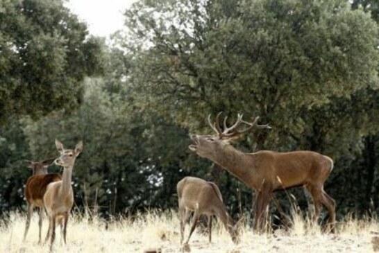 La caza como herramienta de conservación en Monfragüe