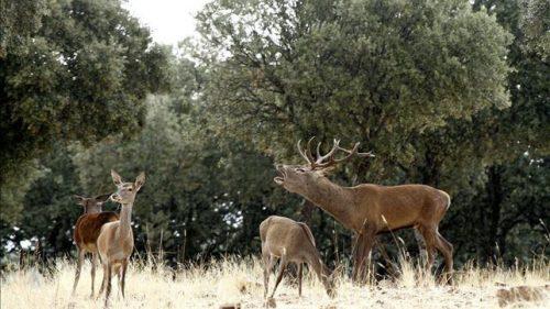 """<span class=""""entry-title-primary"""">La caza como herramienta de conservación en Monfragüe</span> <span class=""""entry-subtitle"""">La ONC y la Federación Extremeña de Caza reclaman una modificación de la Ley de Parques Nacionales </span>"""