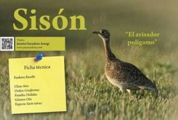 """Sisón: """"El avisador polígamo"""" Cuaderno de Campo"""