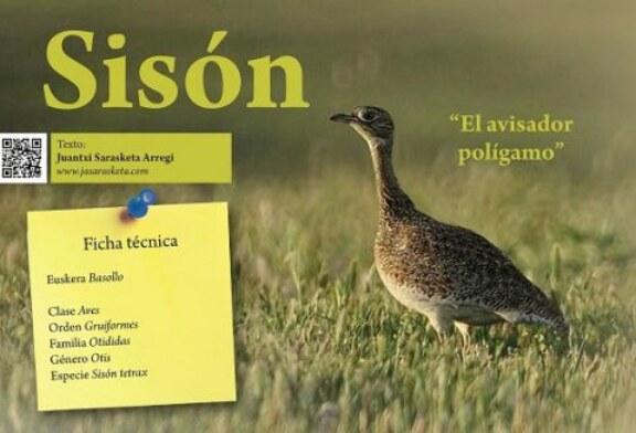 Sisón: «El avisador polígamo» Cuaderno de Campo
