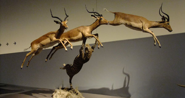 taxidermia buena