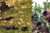 La ONC pide al Ministerio el cambio del sistema de responsabilidad por daños en la agricultura