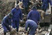 Alemania permitirá cazar jabalíes todo el año para prevenir la peste porcina