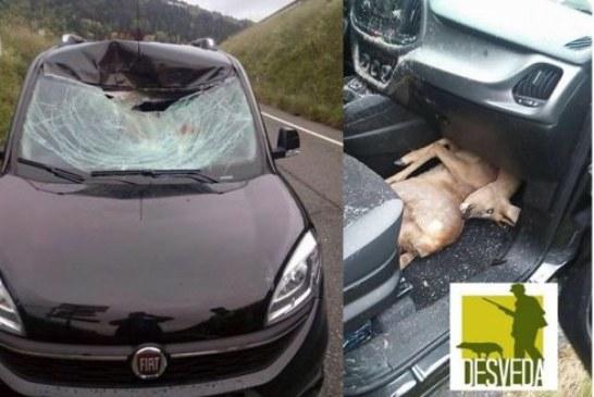 Burgos. Piden ayuda a cazadores por el exceso de accidentes de tráfico producido por especies cinegéticas