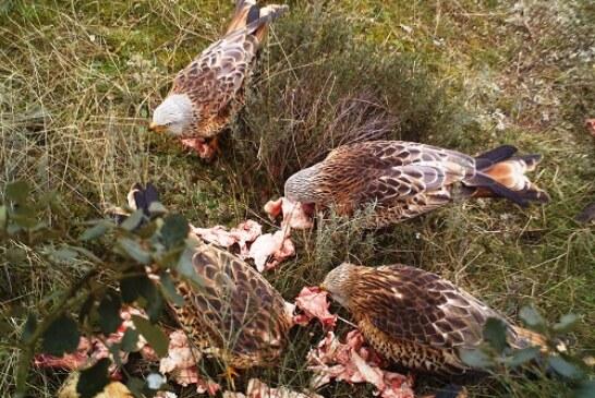 Consideraciones de la UNAC al destino de las piezas de caza mayor