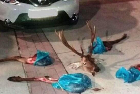 Detienen furtivos en Navarra con un ciervo en el maletero