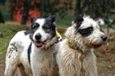 Entra en vigor el Convenio Europeo de protección de animales de compañía