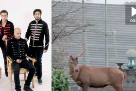 El enigma del ciervo suelto por San Sebastián. Ver vídeo interior