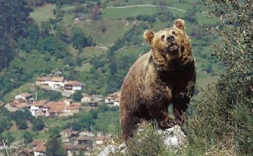 Un palentino asegura haber sido atacado por un oso