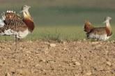 La PAC entra en conflicto con la conservación de la biodiversidad