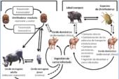 Mesa de trabajo en Alava sobre la Peste Porcina y la gestión de la población de jabalíes