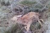 Mueren más de 25 ciervos en el parque de Salburua en Vitoria