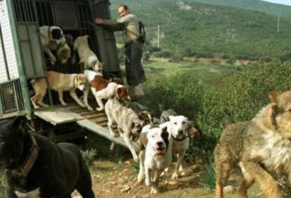 ARRECAL pide que se simplifique el nuevo RD de los centros de limpieza y desinfección de los vehículos dedicados al transporte de animales en carretera