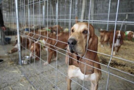 Animalistas boicotean feria de caza