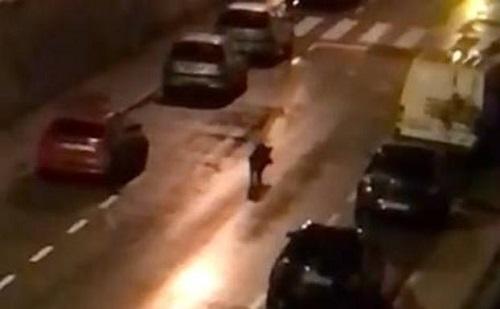 Llevan al Parlamento la presencia de jabalíes en el casco urbano de Santoña