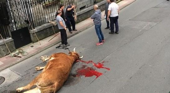 Ertzaina abate de un tiro un buey que escapó en Llodio y PACMA lo denuncia (+ vídeo captura)