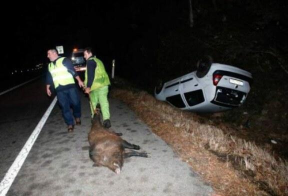 Un conductor se golpea en la cabeza tras cruzarse un jabalí