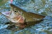 Artemisan y la ONC  celebran la decisión del Congreso de modificar la ley de Patrimonio Natural