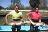El río Tormes acoge hasta el domingo un encuentro en torno al salmón del Danubio