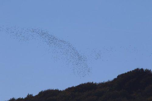Castilla y León da el primer paso para ampliar el período de caza de la paloma torcaz