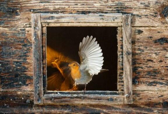 Charla Coloquio en Pamplona: «Pasión por las especies»