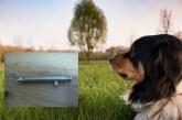 Bizkaia. Legalización armas detonadoras adiestramiento perros