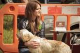 La RFEC exige a los animalistas que dejen de mentir sobre el abandono de perros de caza