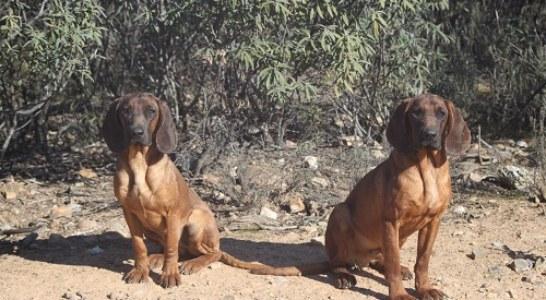 Campaña para sensibilizar sobre abandono de mascotas en verano
