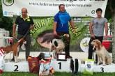 Resultados del Campeonato de España de Perros de Rastro