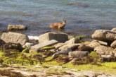 Bañistas terminan matando un corzo al que prendian rescatar