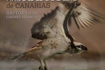 RFEC exige la rectificación del libro que acusa a los cetreros de expoliar nidos