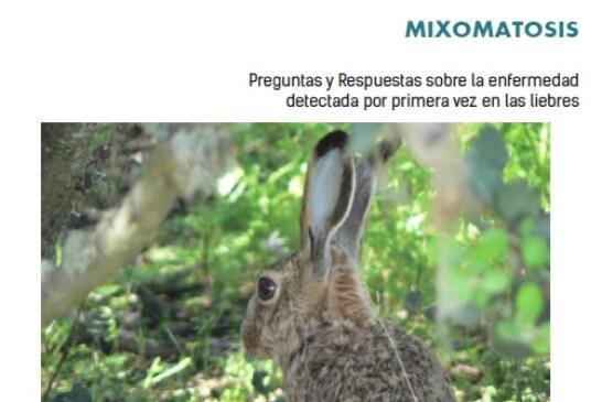 Descárgate el folleto informativo sobre la mixomatosis en liebres