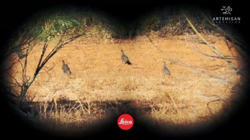 Fundación Artemisan lanza la segunda fase del primer conteo nacional de perdiz roja