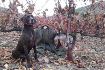 Cazar perdices a rabo junto a tu compañero y amigo… Tu perro de caza